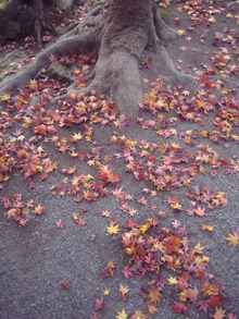 autumnleaves06.jpg
