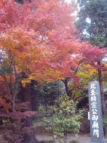 autumnleaves07.jpg