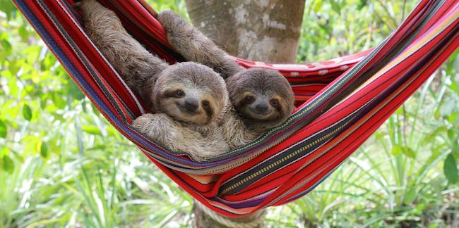 コスタリカは、野生動物の宝庫です。全ての命が、輝き生きてる!