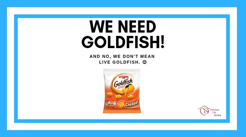 goldfish banner (1).png