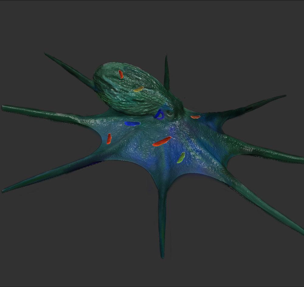 Octopus2.jpg