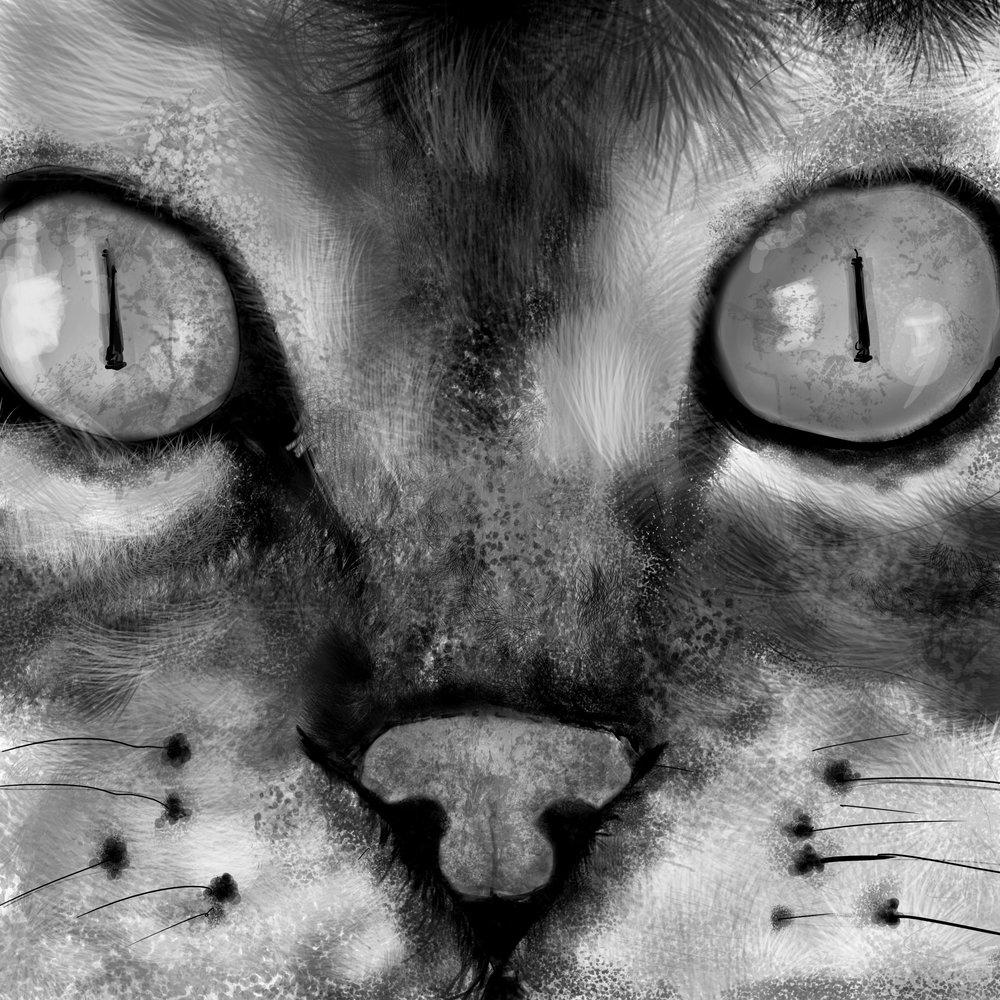catvalue8.jpg