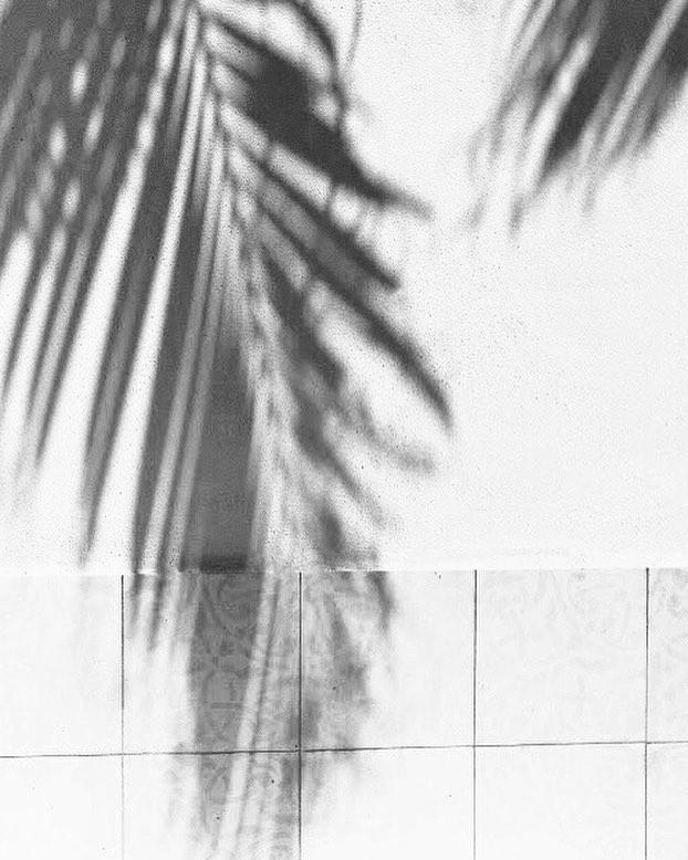 - W e e k e n d - #houseofgruzlewski #coastal #palms #weekend #moods