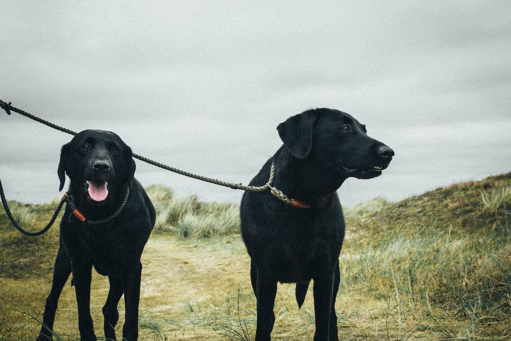 cute dogs 4-1.jpg