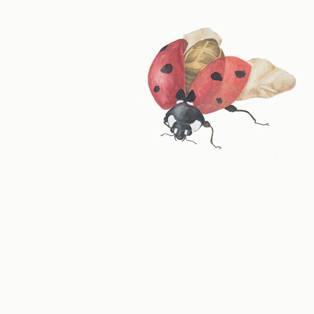 Paper-Roses | Ladybird