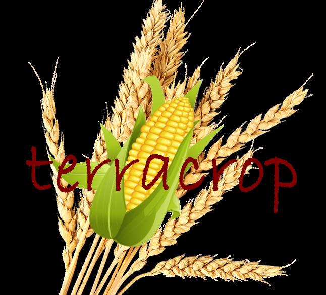 Terracrop