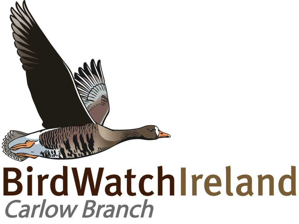 BirdWatch Ireland - Carlow Branch