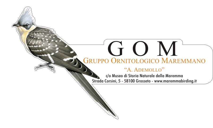 GOM - Gruppo Ornitologico Maremmano