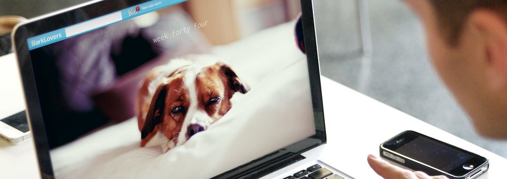 BarkBox - Brand Strategy, Conceptual Product Design