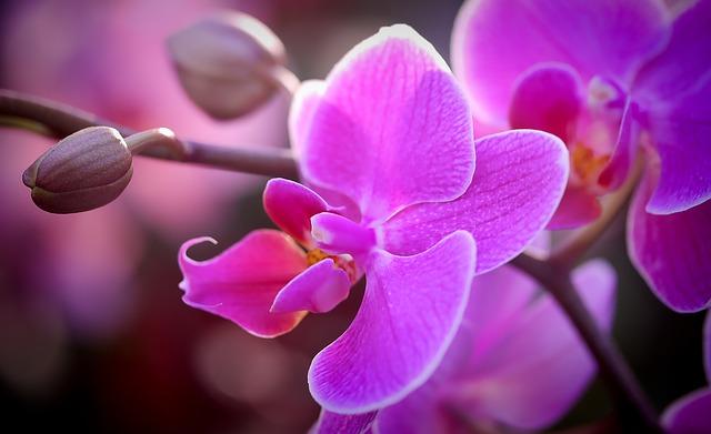 Orchid flowers.jpg