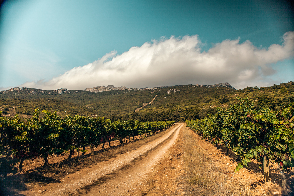 jeremyfenske_photography_video_spain_rioja-6120.jpg