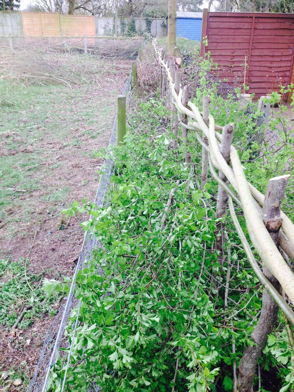Hedge laying by WonderWood