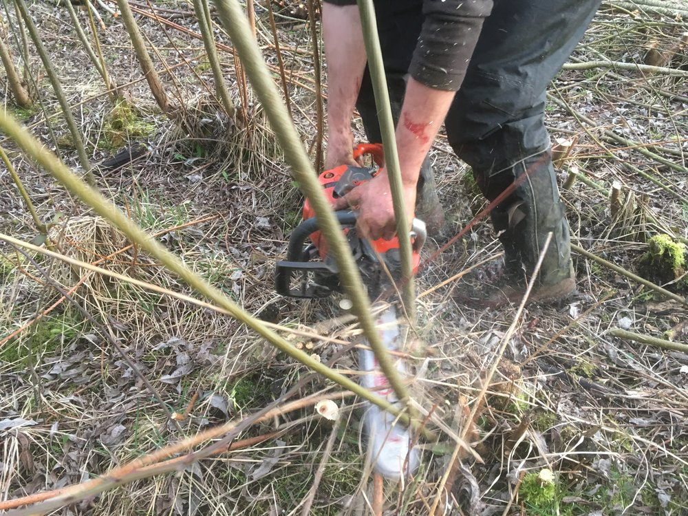 Chainsawing Willow Stools