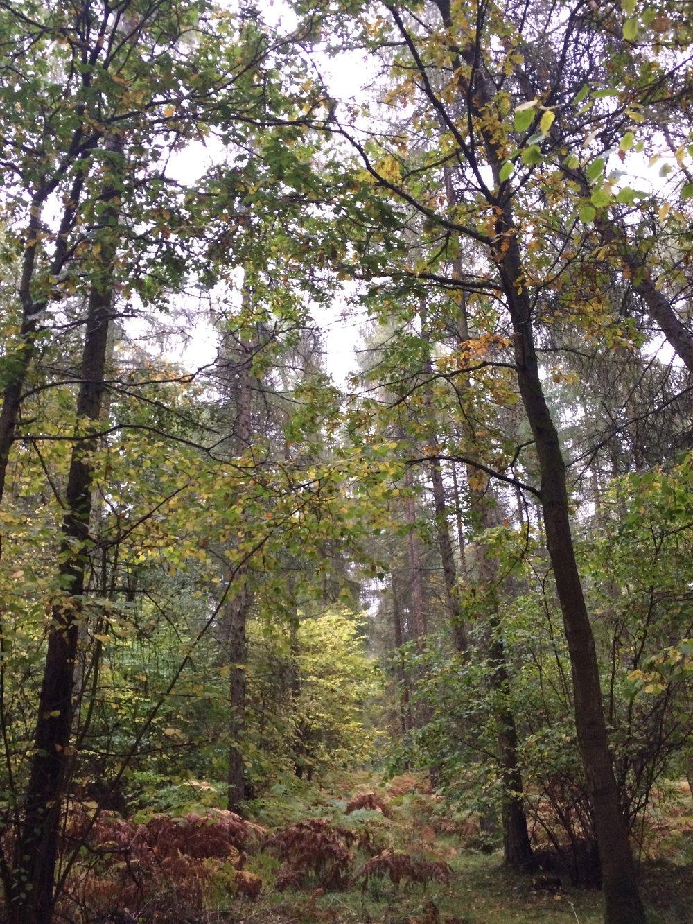 Blenheim Woodlands