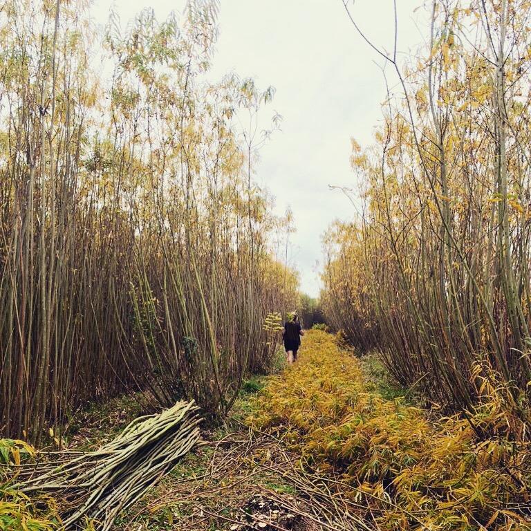 Sorting and Bundling Willow