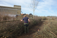 Tim Radford hedgelaying
