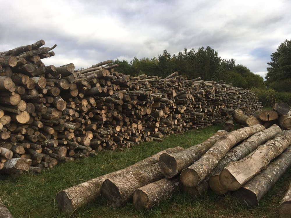 Ash fire wood stack