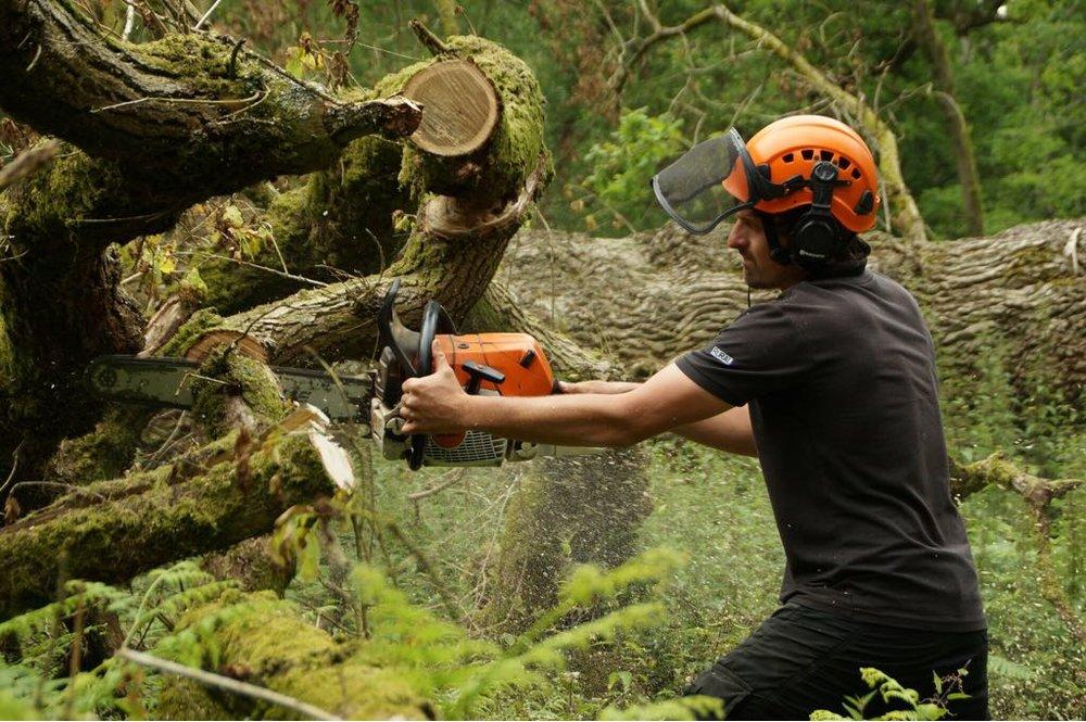 Emergancy tree clearance by WonderWood Oxford