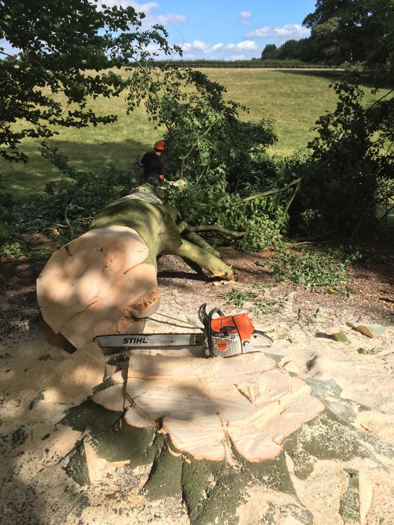 Emergency tree surgery and clearance by WonderWood Oxford