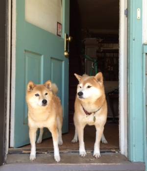 My dogs Ginger and Haiku, respecting the doorway boundary.