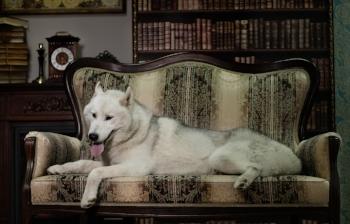 couchwolf.jpg