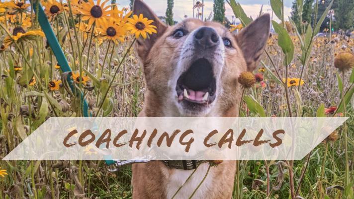 COACHING CALLS.jpg