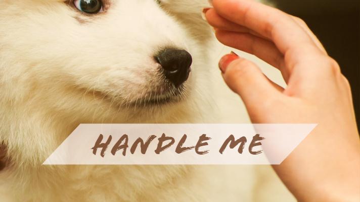 HANDLE ME.jpg