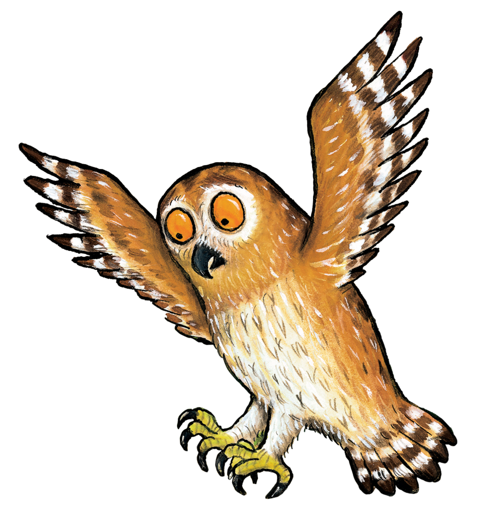 owl_02.png