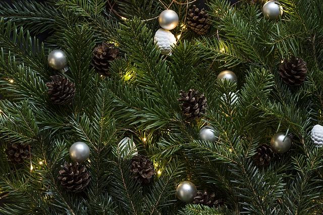 pinetree-1149893_640.jpg