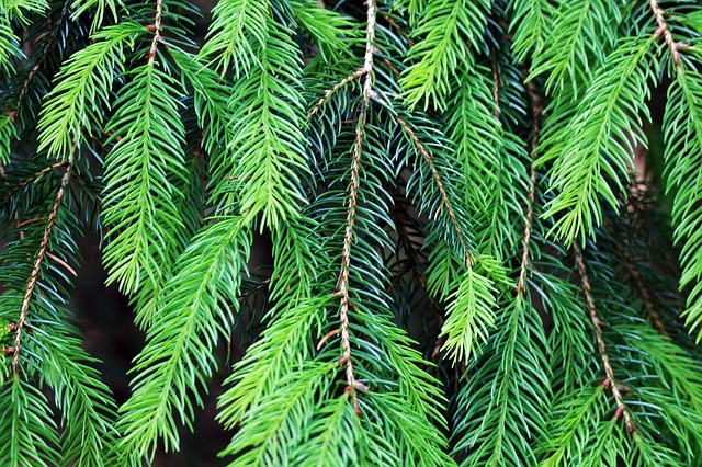 branch-1836065_640.jpg