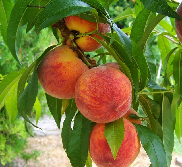 peach-846962_640.jpg