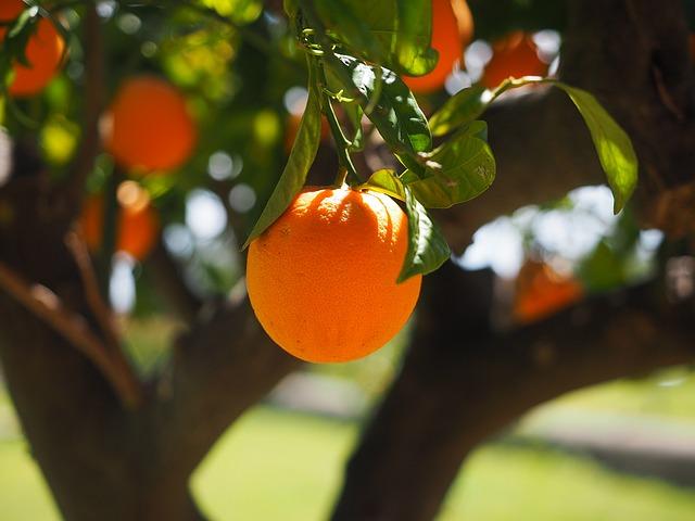 orange-1117645_640.jpg