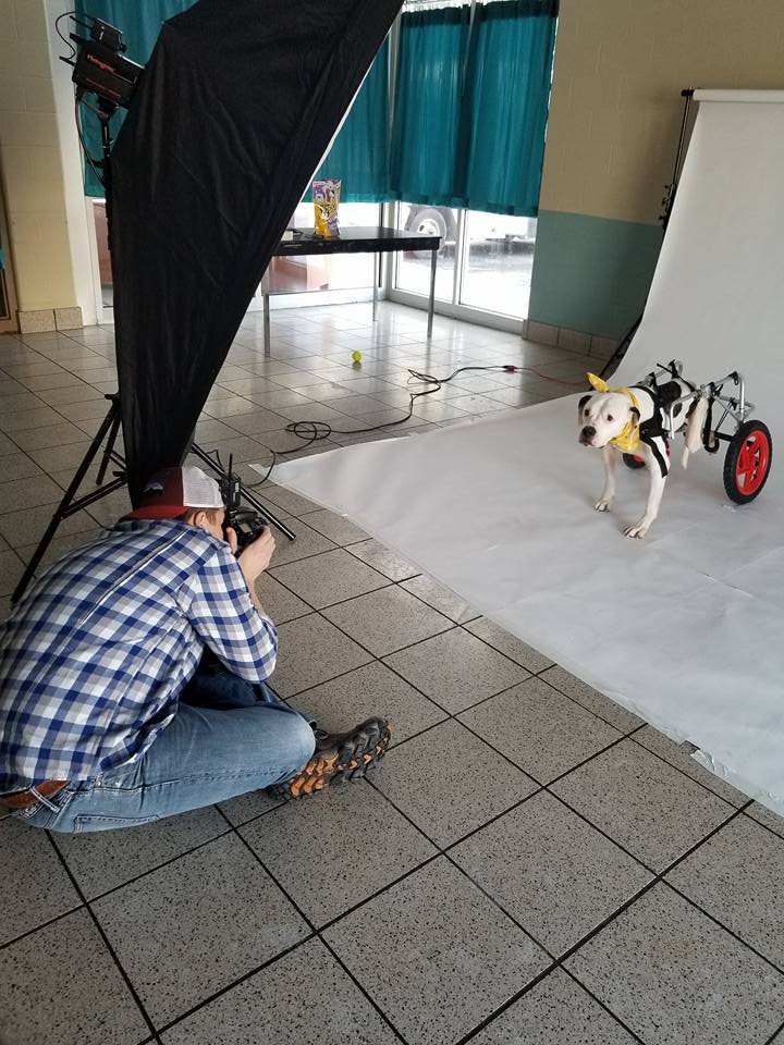 butch photographing dogs.jpg