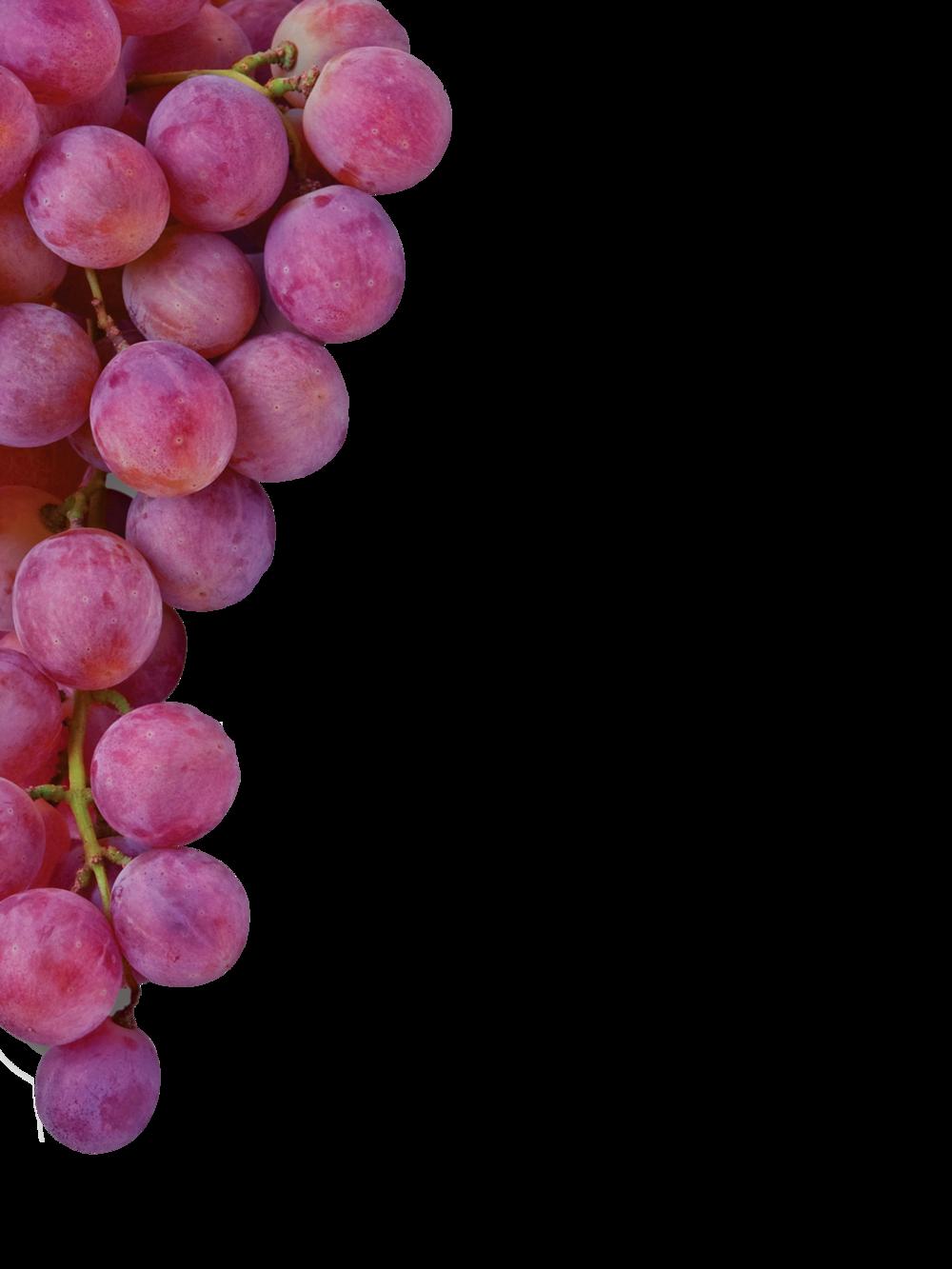 grapes sharing christ no shadow.png