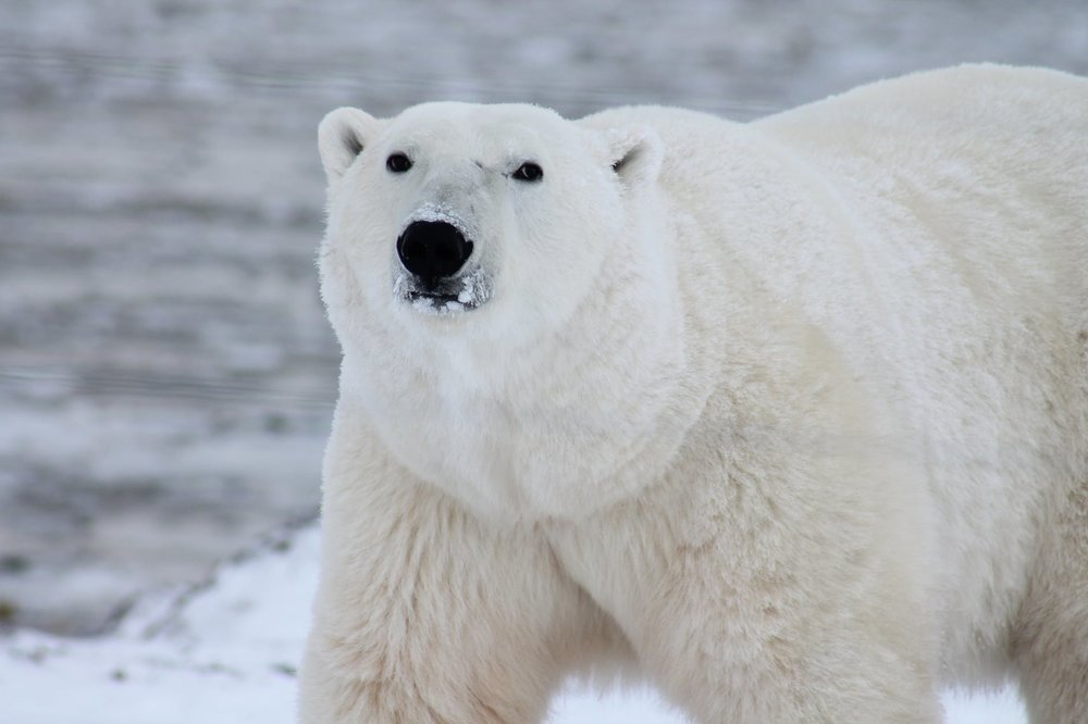 arctic6.jpeg