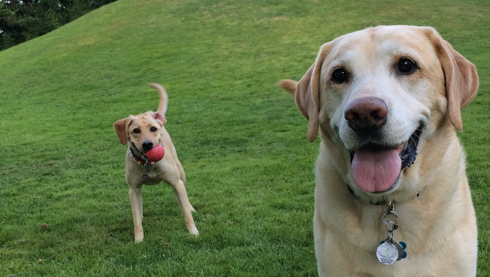 George and his big Smile with his sister Gracie