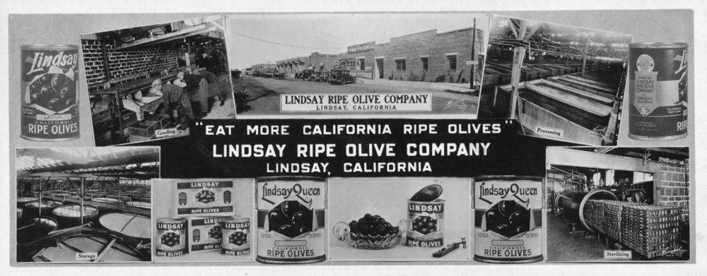 Olive Advertising.jpg