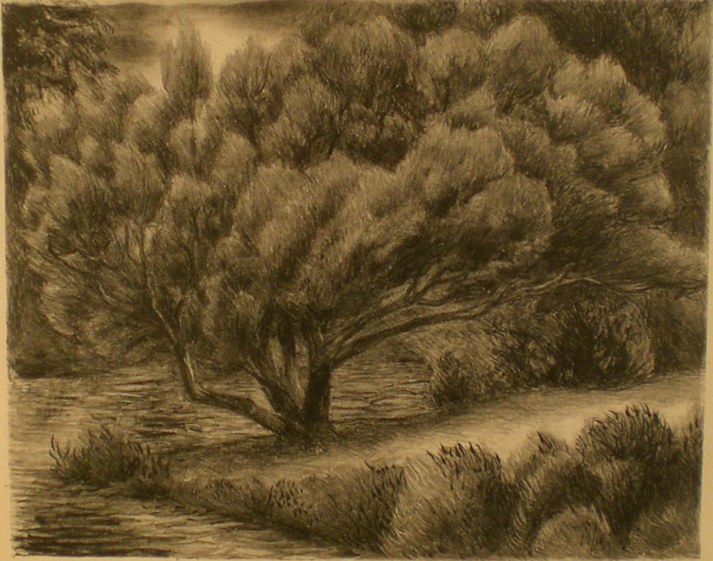 Juniper Tree, 20¾ x 18 Pathways Original Print Collection