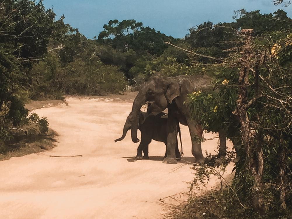 Sehr süss die Elefanten