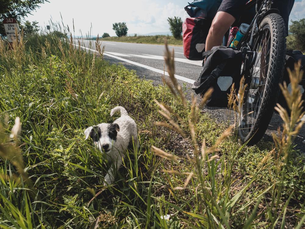 Der kleine Süsse Hund hat uns verfolgt bis wir ihn gefüttert haben