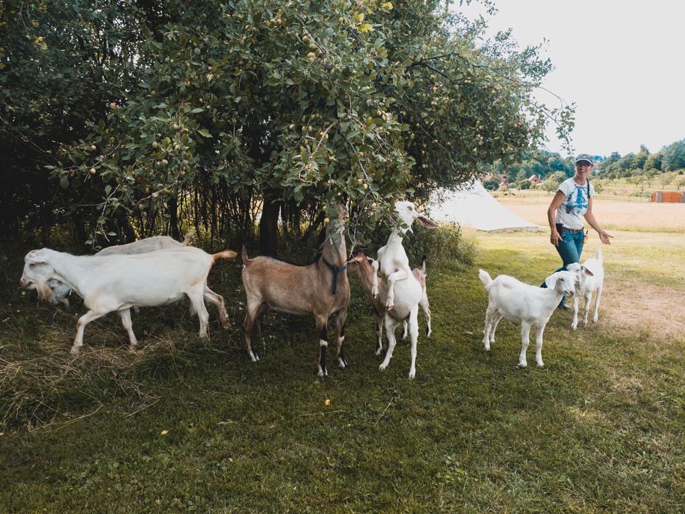 Der beste Campingplatz bisher: mit Ziegenmilch und Käse direkt ab Ziege