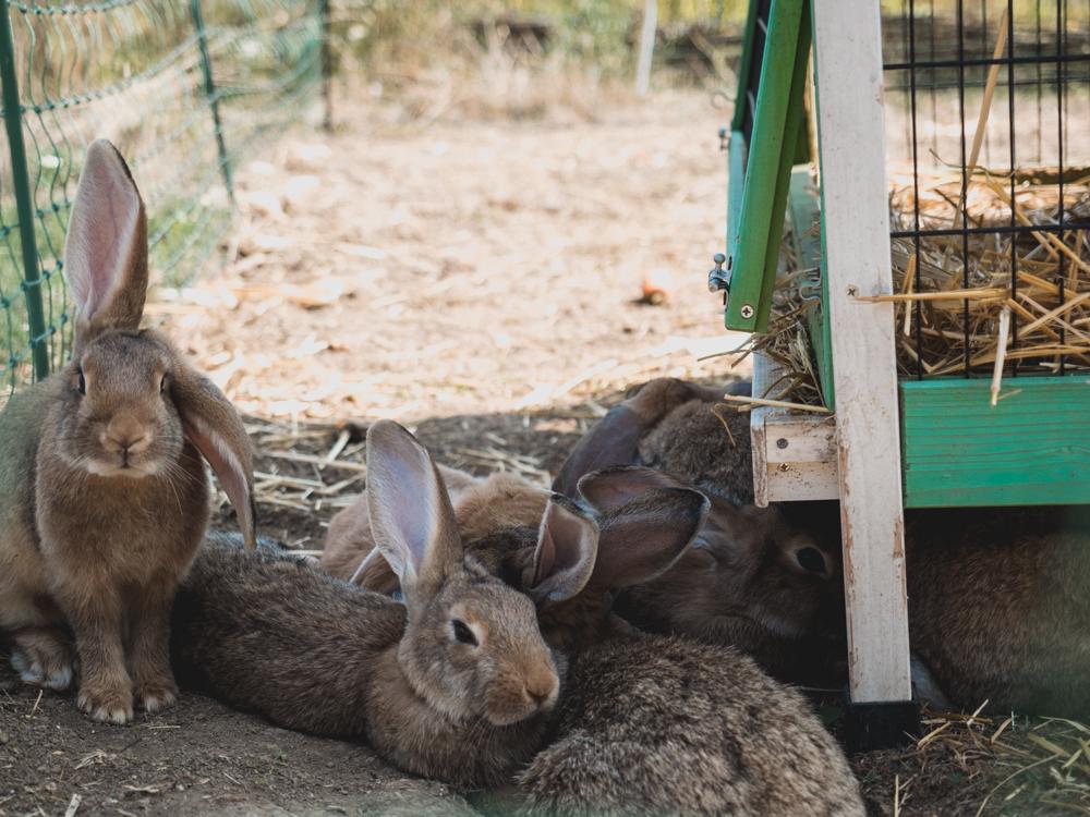 Zu Besuch bei unseren Freunden und ihren Tierchen