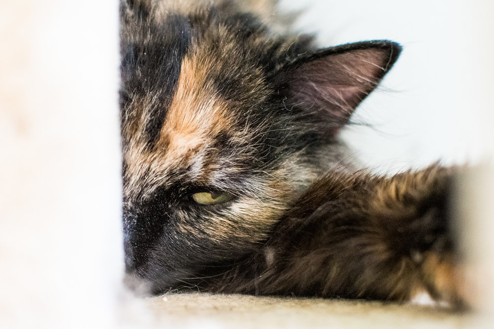 Cats Compressed-23.JPG