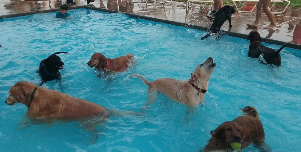 Big dogs in the kiddie pool