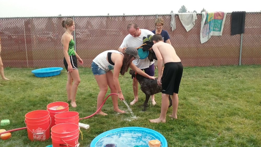 The water polo team gives each dog a good wash when they're done playing in the pool.