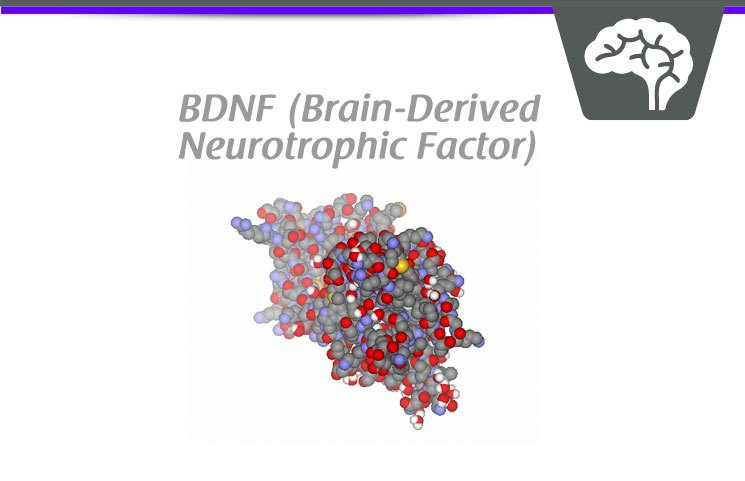 BDNF-Brain-Derived-Neurotrophic-Factor.jpg