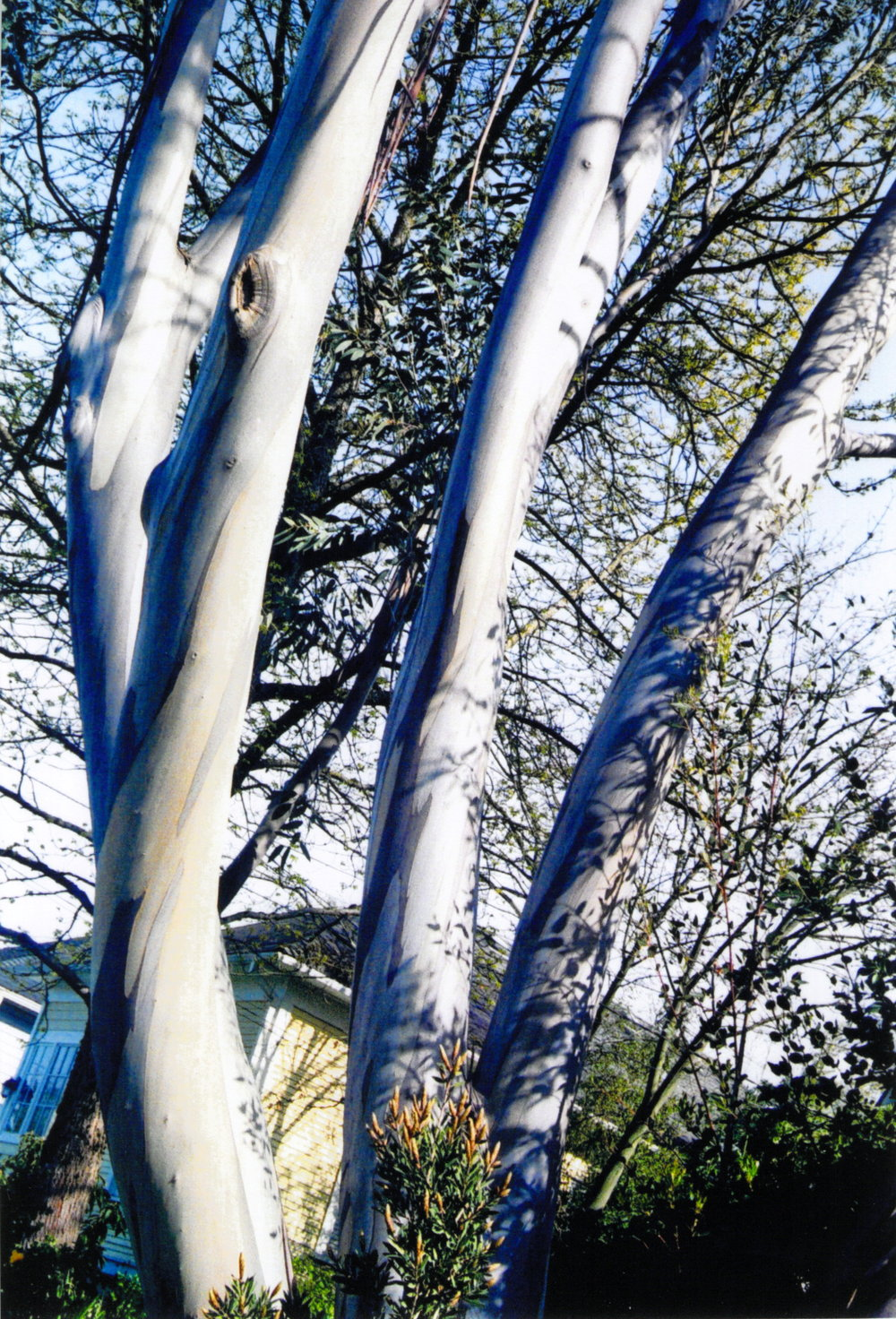 My favorite birch