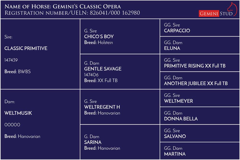 Classic Opera - 15hh Dark Brown Stallion- Stud fee £800 (no VAT) NFFR -