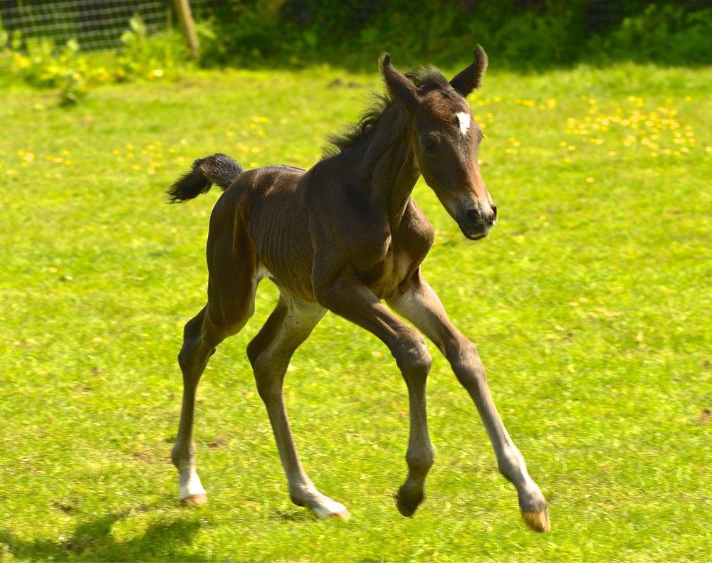Geminis Classic Dancer_Horse and Hound_01_20_05_2019.jpg