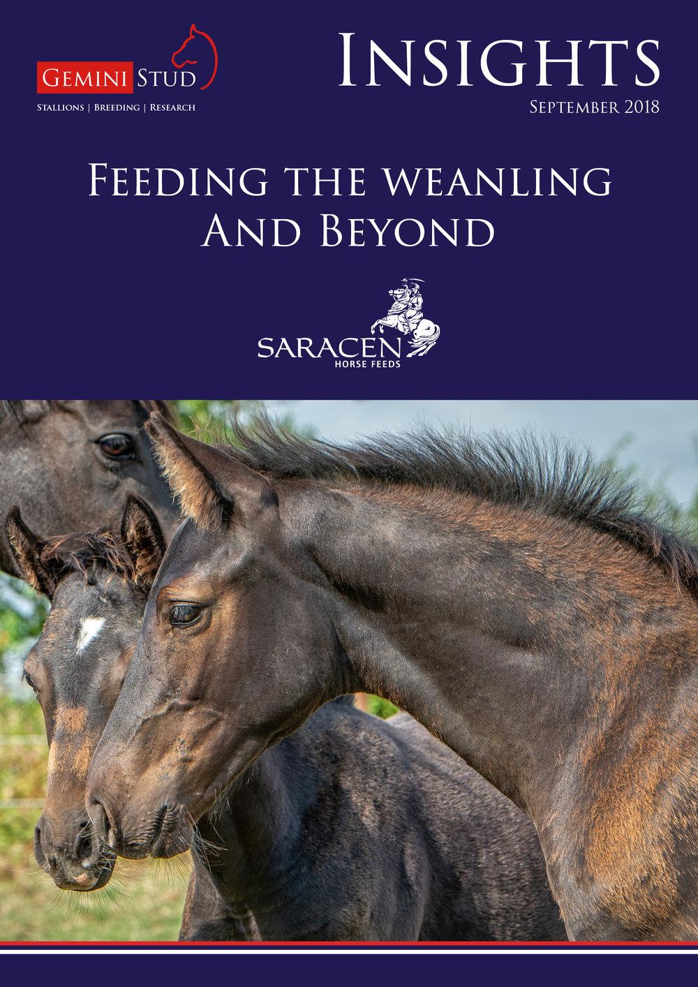 Wildfire Gemini Stud Insight Newsletter Saracen's Horse Feed Weanlings.jpg
